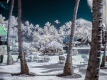 Infrared Holiday