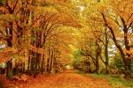 Autumn County