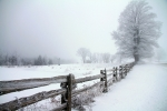 Winter Fence Line
