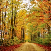 4th of Autumn