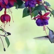 Breakfast with the Hummingbird