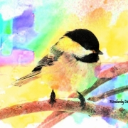 Painted Chickadee