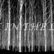 Timber Line