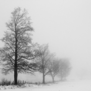 Trees In Fog Right