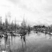 Winter Fallen BW