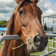 Horse Portrait At Fair